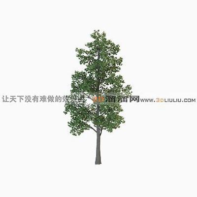 树223D模型【ID:317311520】