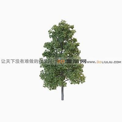 树273D模型【ID:317311591】