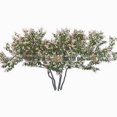 树283D模型【ID:317312526】