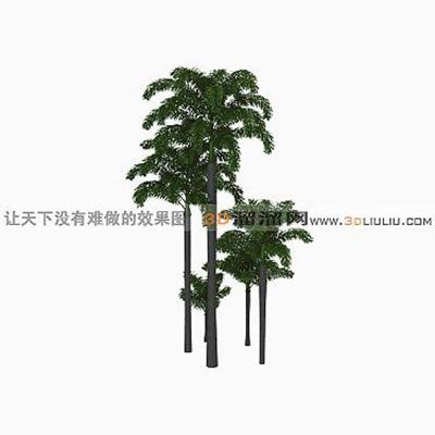 树383D模型【ID:317314537】