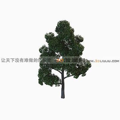 树413D模型【ID:317314565】