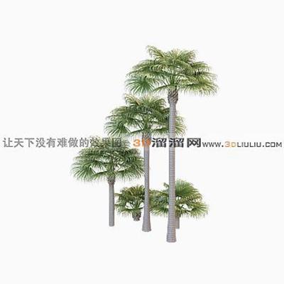 树493D模型【ID:317316510】