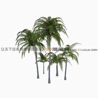 树503D模型【ID:317316526】