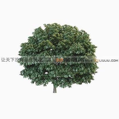 树543D模型【ID:317317564】
