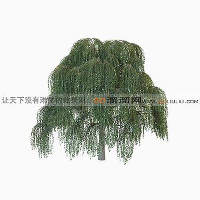 树583D模型【ID:317318567】