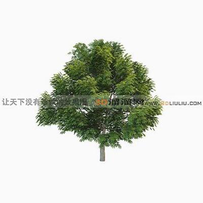 树603D模型【ID:317318599】