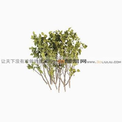 树703D模型【ID:317319568】