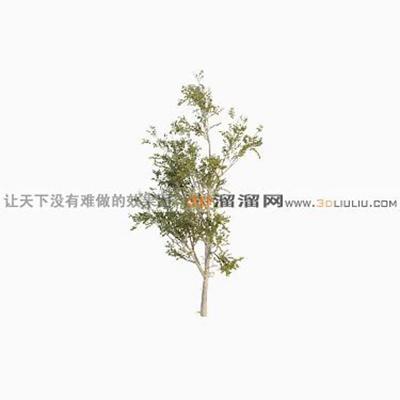 树783D模型【ID:317320510】