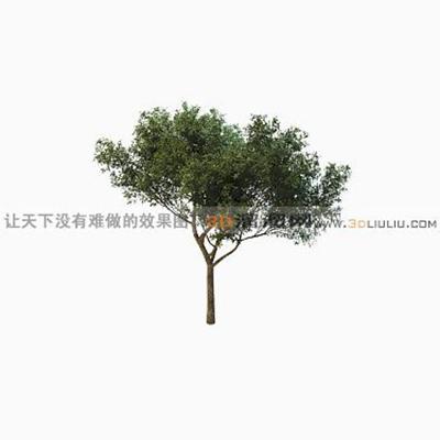树1083D模型【ID:317323521】