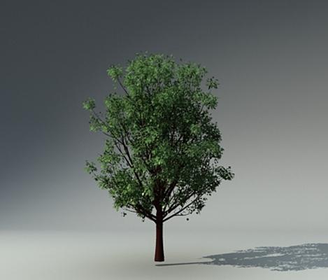 绿色树3D模型【ID:317532677】