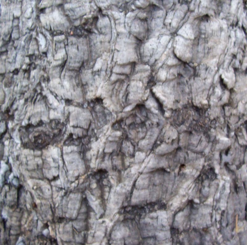 木纹木材-树皮高清贴图【ID:236638329】