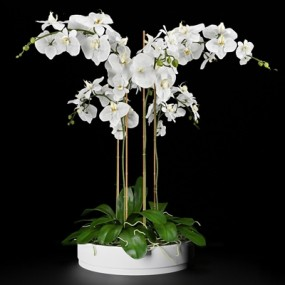 现代绿植盆栽3D模型【ID:36825487】