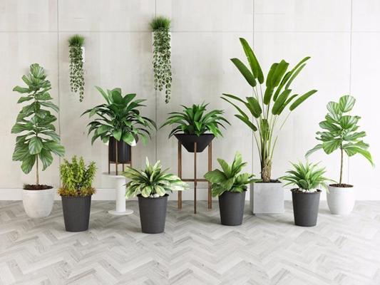 现代绿植盆栽3D模型【ID:36849680】
