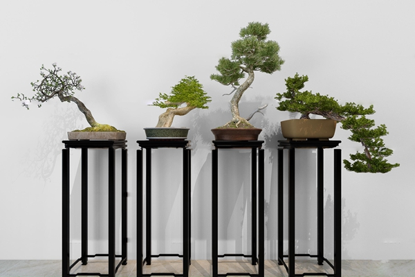中式花架松树盆景盆栽组合3D模型【ID:36871984】
