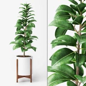 现代盆栽植物国外模型3D模型【ID:36889784】