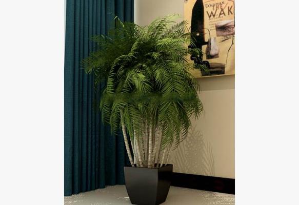 盆景花卉盆栽植物3D模型【ID:36959085】