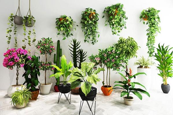 現代花藝盆栽吊蘭綠植組合3D模型【ID:36962085】