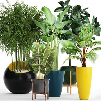 現代蘇鐵竹子綠植盆栽組合3D模型【ID:36962286】