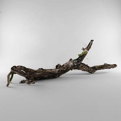 树干3D模型【ID:37088861】