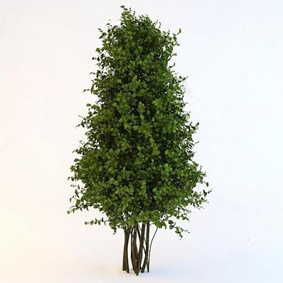 树3D模型【ID:37090862】