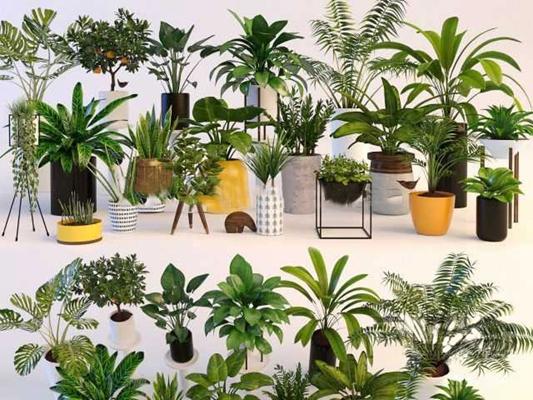 现代陶瓷绿植盆栽组合3d模型【ID:37141686】