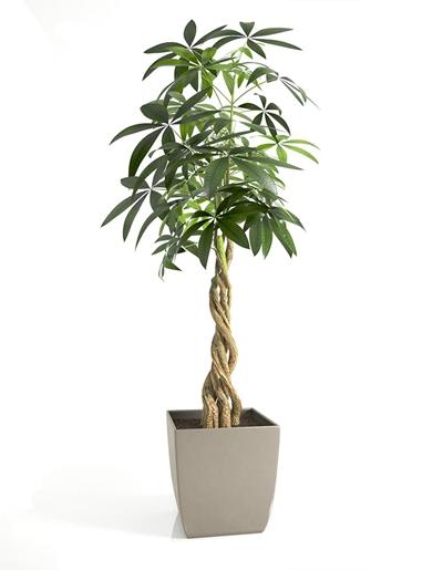 现代富贵树盆栽3D模型【ID:37142080】