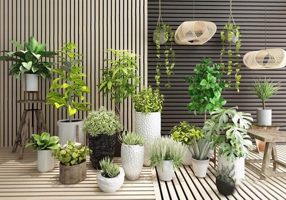 植物盆栽吊兰绿植组合3D模型【ID:37142885】