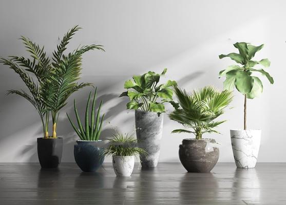 現代綠植盆栽組合3D模型【ID:37194884】
