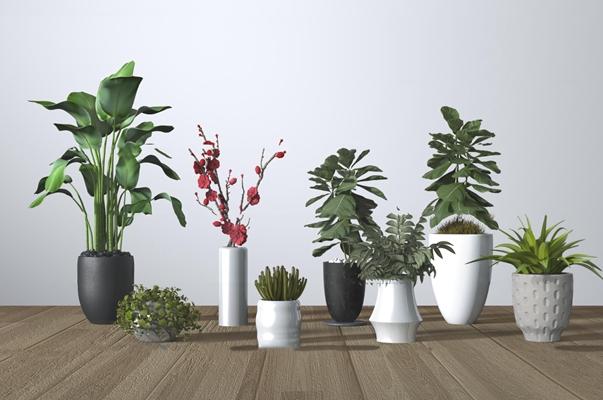 现代植物盆栽组合3d模型【ID:37210482】