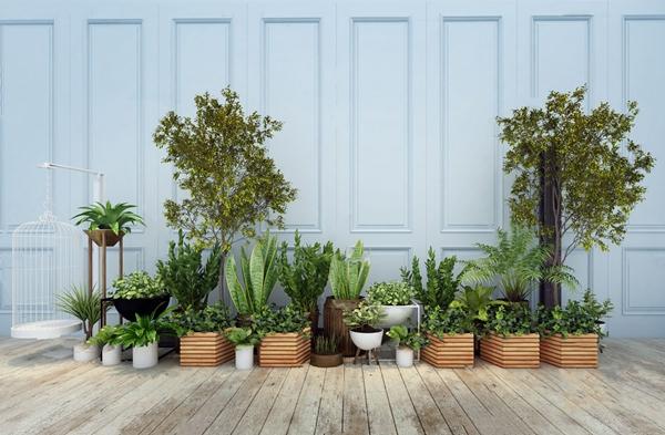 现代绿植盆栽3D模型【ID:247180881】