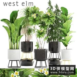 室內盆栽植物組合國外3D模型【ID:229460501】