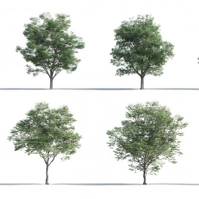 現代樹組合3D模型【ID:327789674】