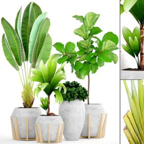 現代綠植盆栽組合3D模型【ID:327786880】
