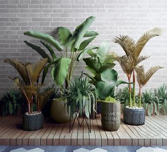 现代植物花盆组合3D模型【ID:241357808】