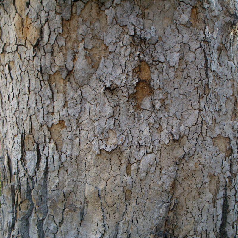 木纹木材-树皮高清贴图【ID:236686375】