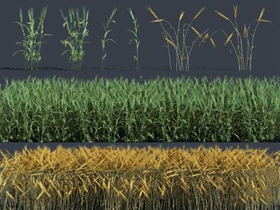 现代植物小麦3D模型【ID:250470875】