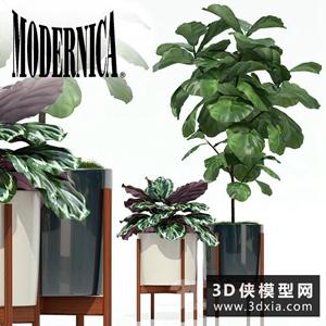 北歐植物組合國外3D模型【ID:229320759】