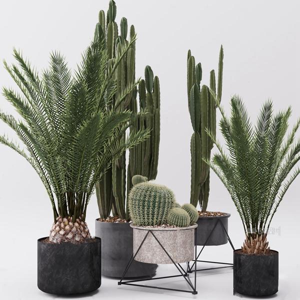 现代绿植盆栽3D模型【ID:247087838】