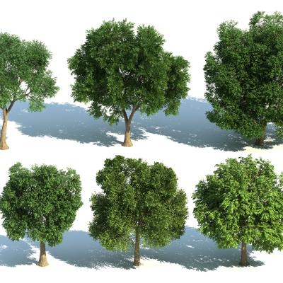 現代樹組合3D模型【ID:327790651】