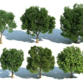 现代树组合3D模型【ID:327790651】