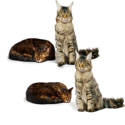现代小猫3D模型