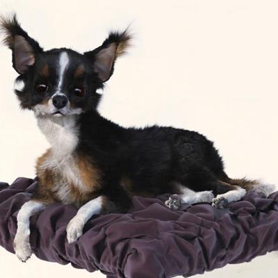 迷你犬宠物狗3D模型