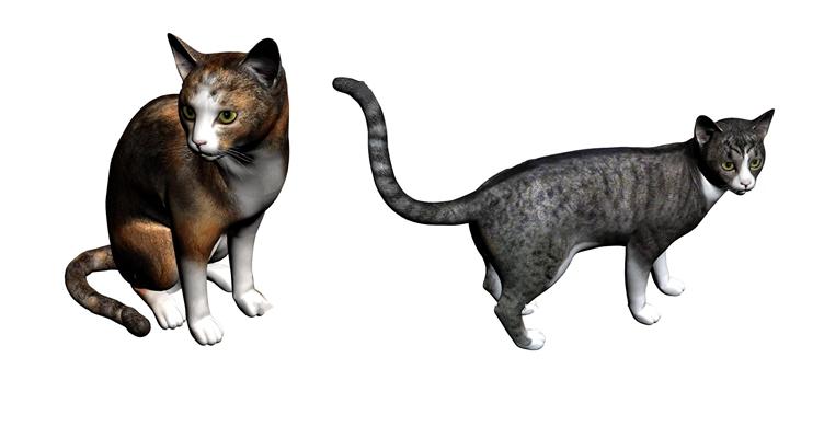 现代俄罗斯猫3D模型