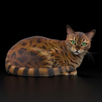 现代动物猫3D模型