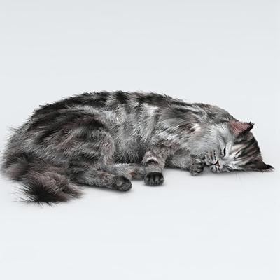 现代猫宠物动物3D模型