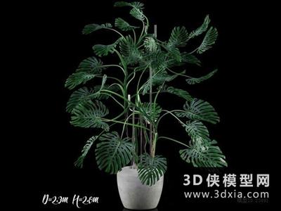 現代植物國外3D模型【ID:229380597】