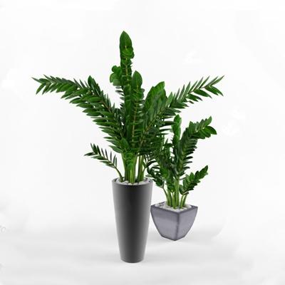 盆栽3D模型【ID:620027077】