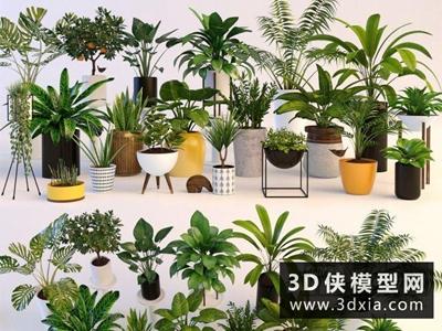 植物裝飾組合國外3D模型【ID:229517752】