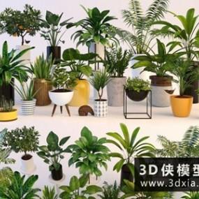 植物装饰组合国外3D模型【ID:229517752】