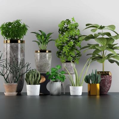 現代綠植盆栽3D模型【ID:328440855】